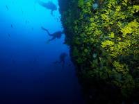 Najada Diving - Tauchen Steilwände