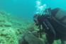 Unterwasserwelt Rab