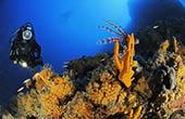 Tauchen Kroatien, Unterwasserwelt Istrien