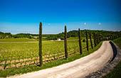 Wandern - Weinstraße Istrien