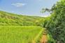 Üppige Natur - Staza Suhozida