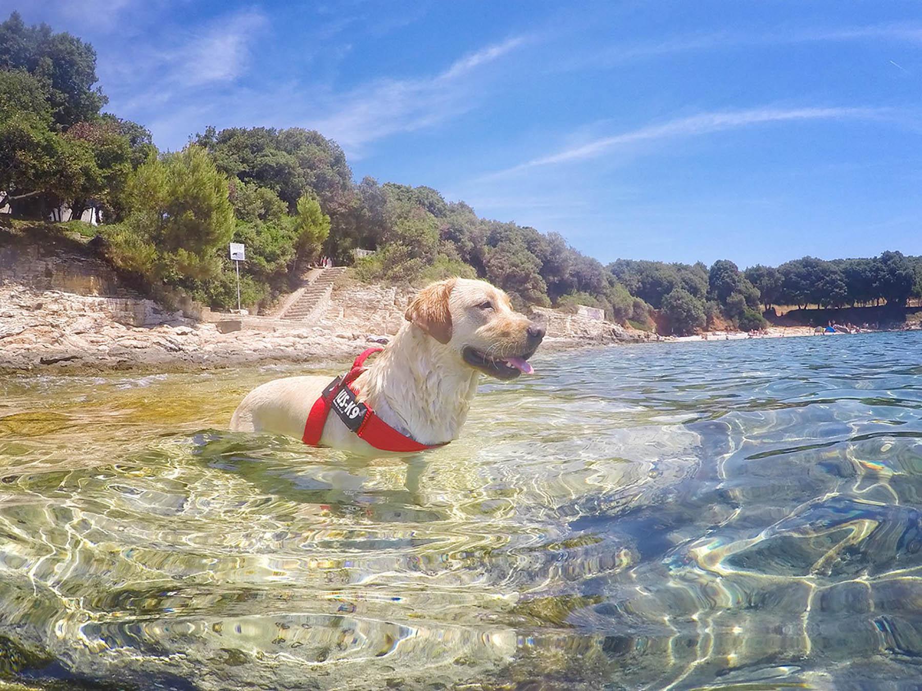 Porec Horvátország - nyaralas Porec, szállás, szállodák