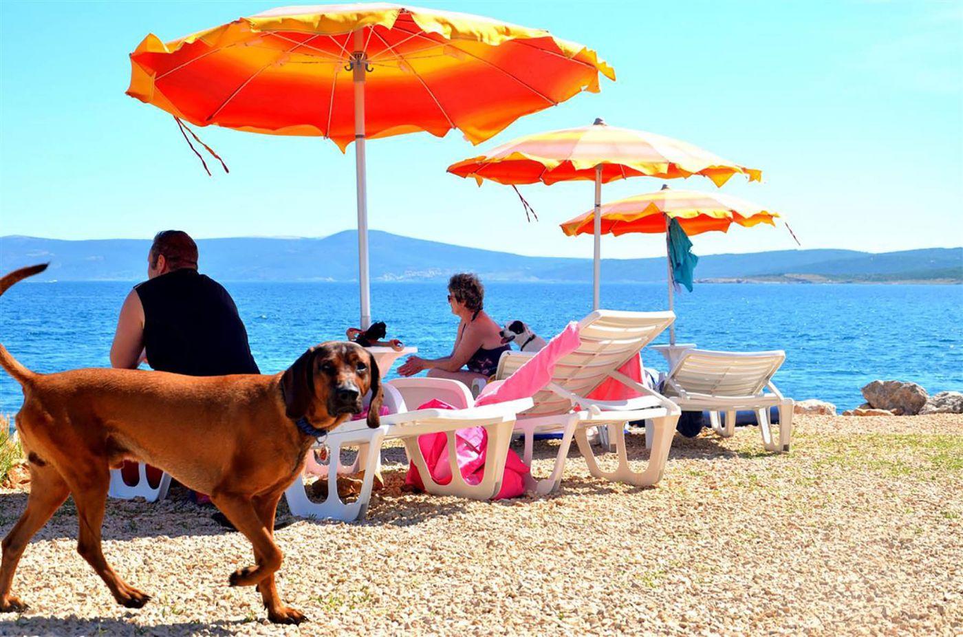Dog Bar Restaurant