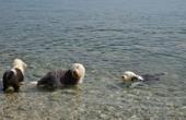 Hundestrand Crikvenica - Meer