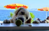 Hund an Bar - Hundestrand Crikvenica