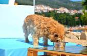 Hundestrand Crikvenica - Wasser