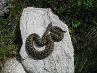 Gefaehrliche Tiere in Kroatien
