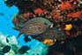 Fischreiche Unterwasserwelt