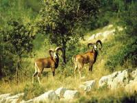 Weitere interessante Tiere in Kroatien