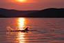 Delfin Kroatien