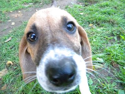 Hund von der Tierhilfe Benkovac Zadar