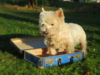 Einreisevorschriften für Haustiere