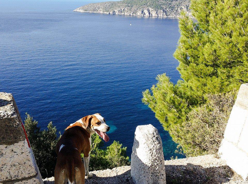 Kroatien Urlaub Mit Hund