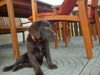 Hund im Restaurant in Kroatien