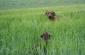 Hund in einer Landschaft in Kroatien