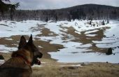 Hund im Nationalpark