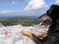 Hund im Nationalpark in Kroatien
