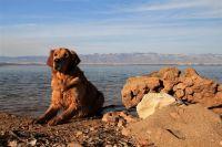 Hund am Strand in Kroatien