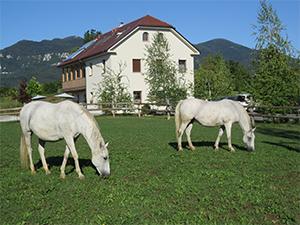 Lipizzaner Lodge