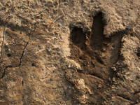 Nationalpark Brijuni - Dinosaurier