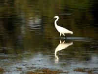 Nationalpark Brijuni - Vogelreservat Saline