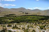 Vegetation auf den Kornaten, Kroatien