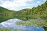 Nationalpark Krka - Seerosen