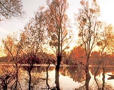 Naturpark Lonjsko Polje