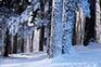 Schnee Medvednica