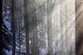 Wald Medvednica