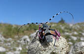 Fauna im Nationalpark Paklenica