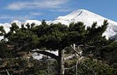 Schneebedeckte Gipfel, Nationalpark Paklenica