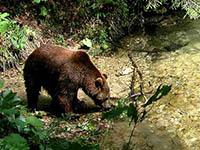 Nationalpark Plitvicer Seen - Fauna