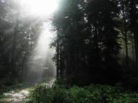 Nationalpark Plitvicer Seen - Flora