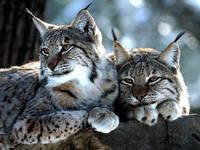 Wildbeobachtung im Nationalpark Risnjak