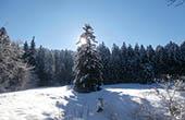 Schneelandschaft im Nationalpark Risnjak