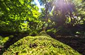 Flora, Nationalpark Risnjak, Kroatien