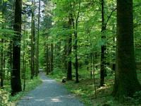 Lehrpfad leska, Nationalpark Risnjak