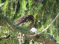 Vogel im Nationalpark Risnjak, Kroatien