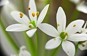 Flora im Naturpark Biokovo
