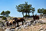 Pferde im Naturpark Biokovo