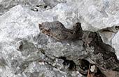 Schlange im Naturpark Biokovo