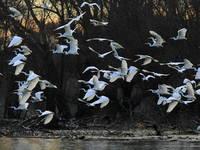 Vögel im Naturpark Kopacki rit, Kroatien