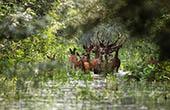 Tierwelt im Naturpark Kopacki rit, Kroatien