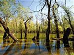 Der Naturpark Kopacki Rit