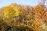 Herbstwald, Naturpark Medvednica