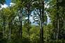 Üppige Wälder, Naturpark Medvednica