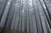 Panorama, Wald