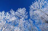 Schnee, Veternica