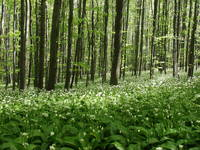Flora, Naturpark Papuk